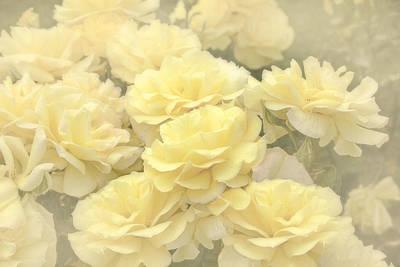 Photograph - Yellow Chiffon Rose Garden by Jennie Marie Schell