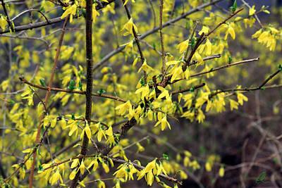Photograph - Yellow by Chris Thomas