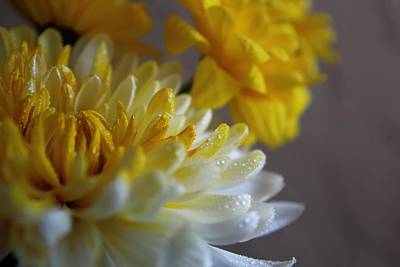Photograph - Yellow Chrysanthemum by Lynn Jordan
