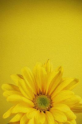 Digitally Manipulated Photograph - Yellow Chrysanthemum by Vishwanath Bhat