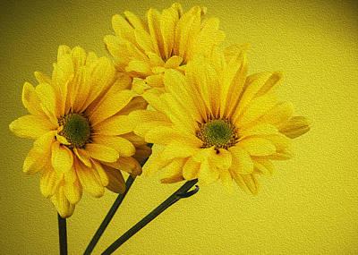 Digitally Manipulated Photograph - Yellow Chrysanthemums  by Vishwanath Bhat