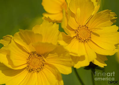 Photograph - Yellow  Close Up by Wanda Krack
