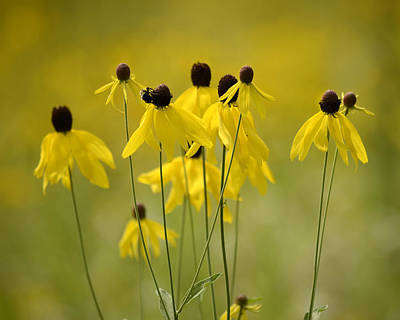 Photograph - Yellow Cone Flower by Ann Bridges