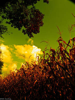 Photograph - Yellow Corn And Sky by Nick Kirby