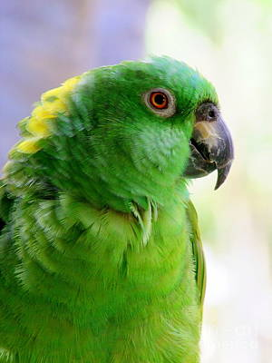 Yellow Crowned Amazon Parrot No 1 Art Print by Mary Deal