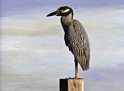 Photograph - Yellow-crowned Night Heron by HH Photography of Florida