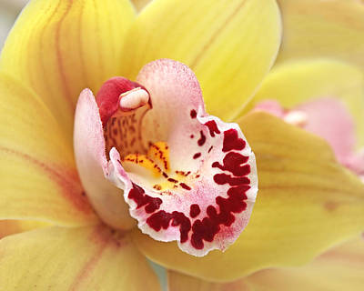 Photograph - Yellow Cymbidium Orchid by Gill Billington