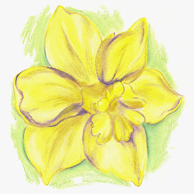 Pastel - Yellow Daffodil Blossom by MM Anderson
