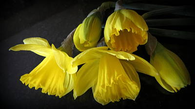 Photograph - Yellow Daffodils by Kay Novy