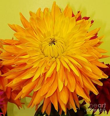 Photograph - Yellow Dahlia by Brigitte Emme