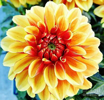 Moisture On Plants Photograph - Colorful - Dahlia - Yellow  Beauty by D Hackett