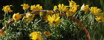 Photograph - Yellow Daisies by Jennifer Muller