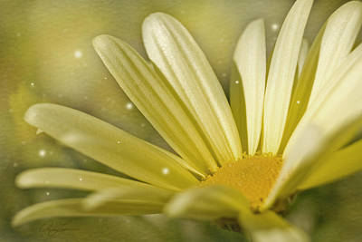 Photograph - Yellow Daisy by Ann Lauwers