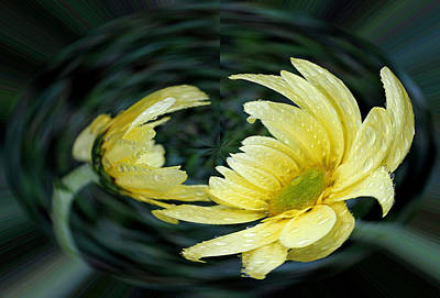 Photograph - Yellow Daisy In A Bubble by Judy Vincent