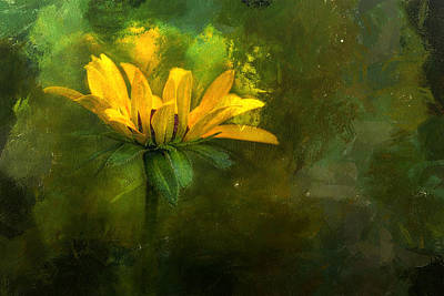 Laura James Photograph - Yellow Daisy by Laura James