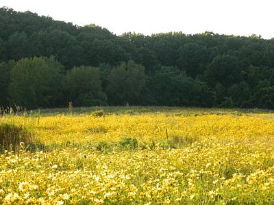 Farm Life Paintings Rob Moline Royalty Free Images - Yellow Daisy Meadow Ohio Royalty-Free Image by Nancy Spirakus