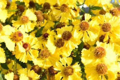 Yellow Daisy Original