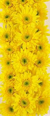 Food And Flowers Still Life - Yellow Daisys by Lina Isaza