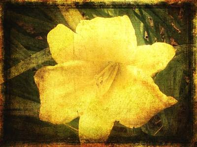 Photograph - Yellow Daylily  by Betty  Pauwels