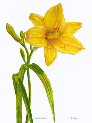 Painting - Yellow Daylily - Hemerocallis by Janet Zeh