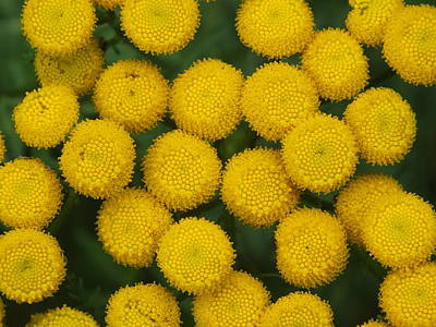 Photograph - Yellow Dots by Gene Cyr