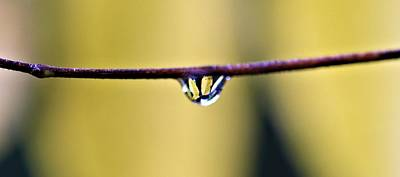 Small Forest. Beauty Photograph - Yellow Drops Of Rain by Dan Sproul