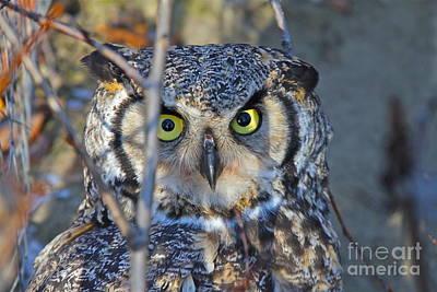 Photograph - Yellow Eye by Rick  Monyahan