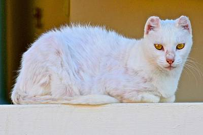 Photograph - Yellow Eyed Cat by Ricardo J Ruiz de Porras