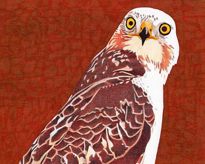 Drawing - Yellow Eyed Hawk by Dan Miller