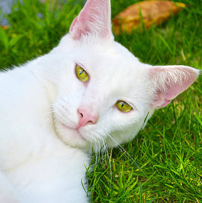 Photograph - Yellow Eyes by Tine Nordbred
