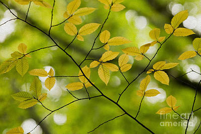 Photograph - Yellow Fall Leaves 2 by Rebecca Cozart