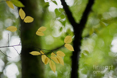 Photograph - Yellow Fall Leaves by Rebecca Cozart