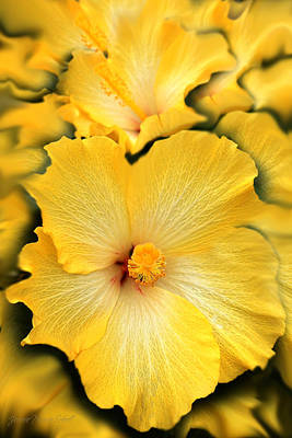 Yellow Fantasy Hibiscus Flowers Art Print by Jennie Marie Schell