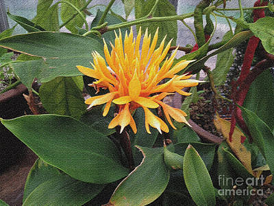 Photograph - Yellow Fellow by Luther Fine Art