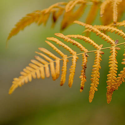 Yellow Fern Art Print by Guido Montanes Castillo