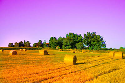 Photograph - Yellow Field by Dany Lison