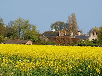 Priska Wettstein Pink Hues - Yellow field by Susan Tinsley