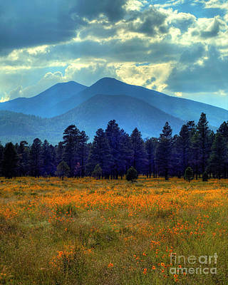 Summer In Flagstaff Photograph - Yellow Fields Forever by K D Graves
