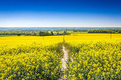 Art Print featuring the photograph Yellow Fields. by Gary Gillette