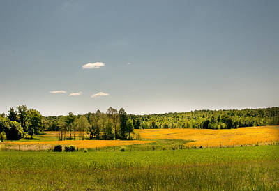 Photograph - Yellow Fields by Lena Wilhite