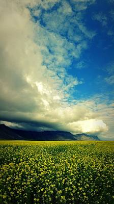 Photograph - Yellow Fields by Sarah Pemberton