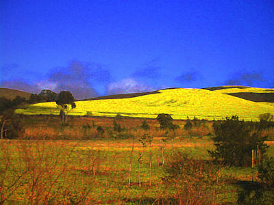 Yellow Fields - South Africa Art Print by Lenore Senior and Constance Widen