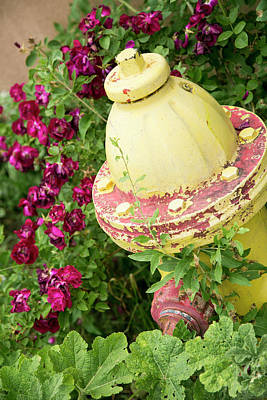 Yellow Fire Hydrant Surrounded Art Print