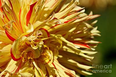 Photograph - Yellow Flames by Chris Anderson