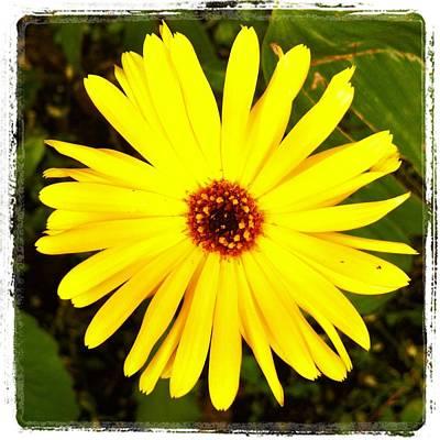 Yellow Flower 12 Art Print
