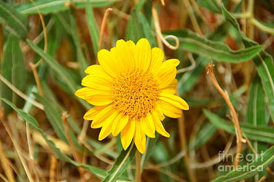 Photograph - Yellow Flower At Monument Valley by Debra Thompson