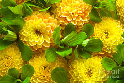 Yellow Flower Beautiful Print by Boon Mee
