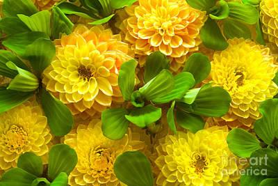 Yellow Flower Beautiful Art Print