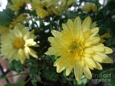 Photograph - Yellow Flower by Chitra Helkar