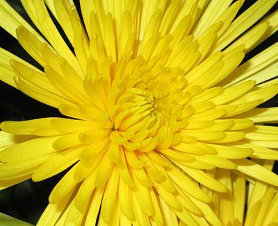 Art Print featuring the photograph Yellow Flower Closeup by Barbara Yearty
